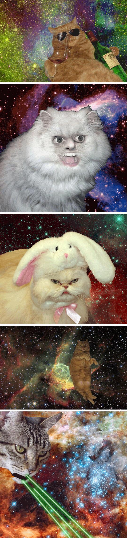 funny-cats-bunny-universe-cosmos