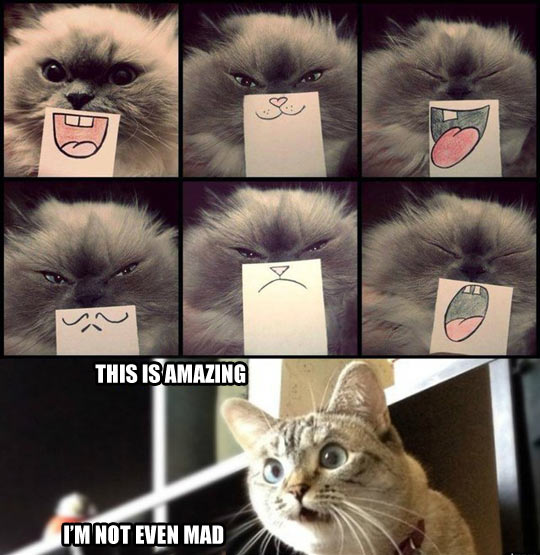 Facial expressions for cats…