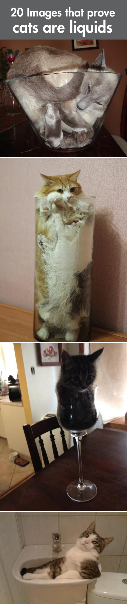 Why cats are liquids...