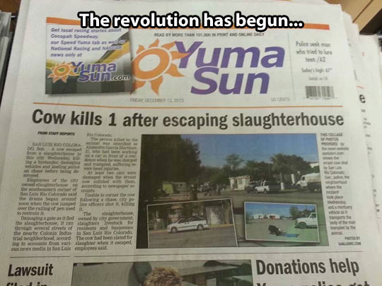 The cow revolution…