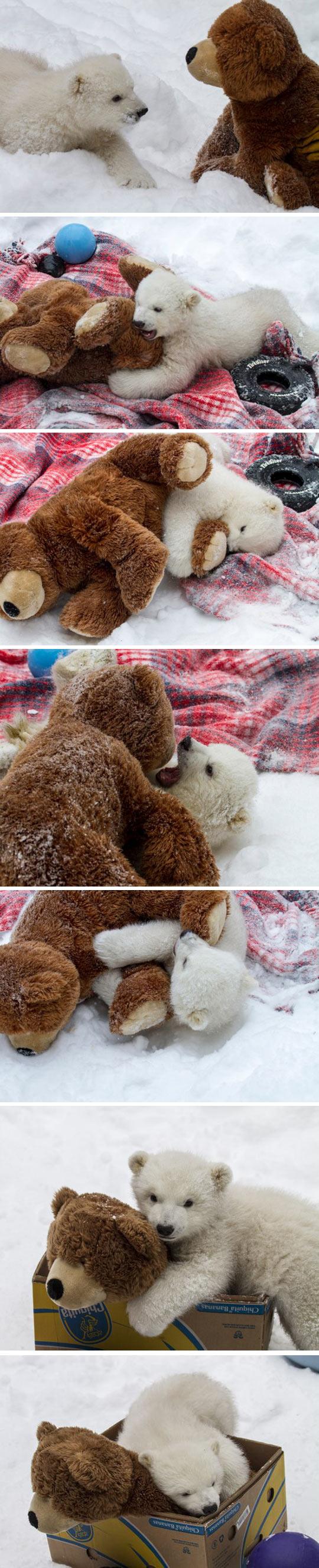 Two teddy bears…