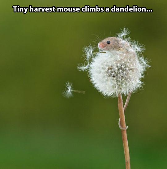 funny-dandelion-mouse-garden-flower-tail