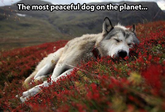 Peaceful dog…