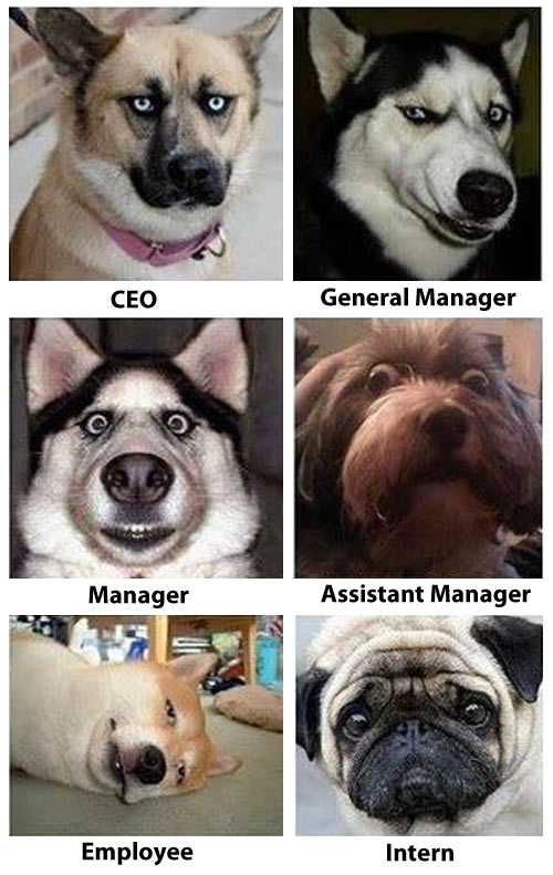 funny-dog-breeds-employees-employer-company