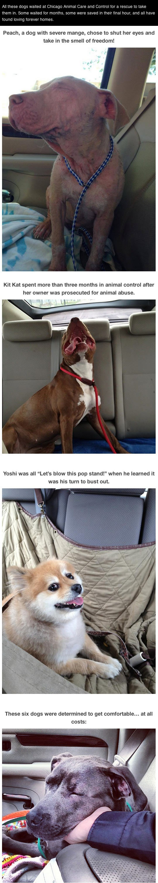 Photos of dogs taken after leaving the shelter and getting in the car...