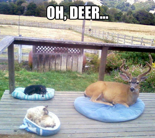 Unexpected guest…