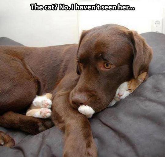 funny-dog-cat-hidden-bed
