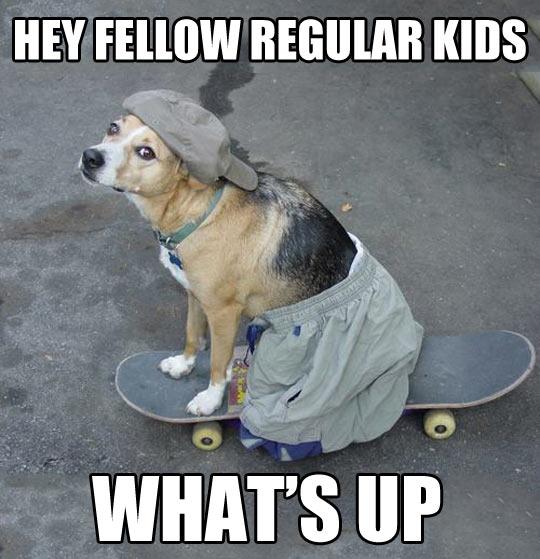 funny-dog-cup-skateboarding-pants