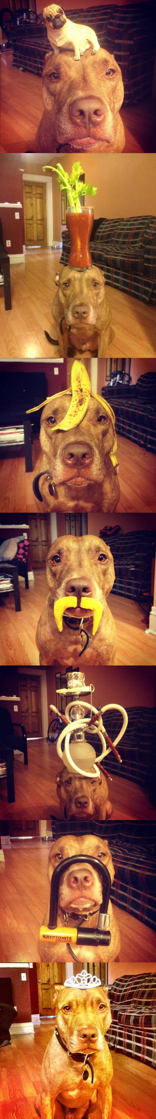funny-dog-disguise-food-balance-hat