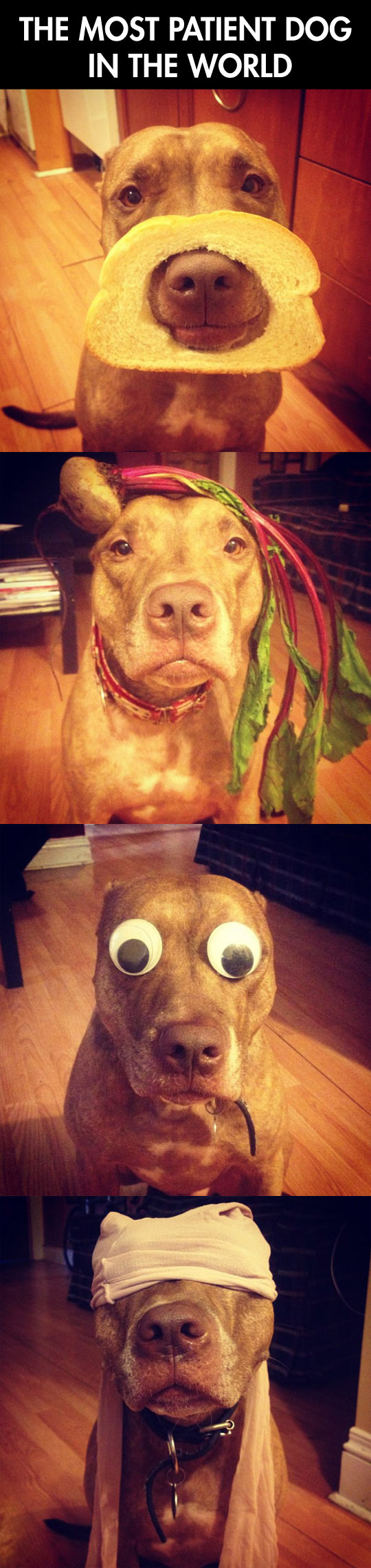 funny-dog-disguise-hat-bread-mask