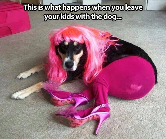 funny-dog-dressed-pink-hair