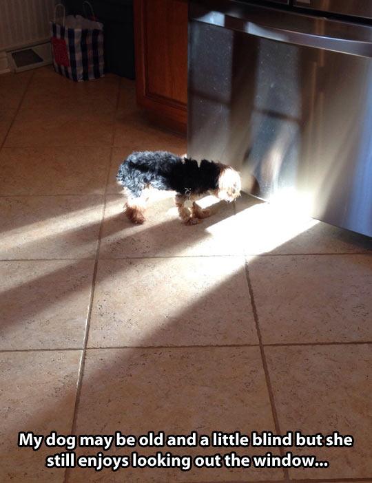 funny-dog-lights-shadow-window-fridge
