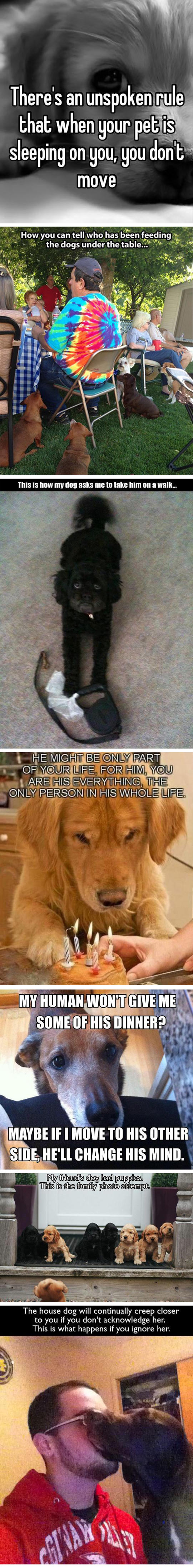 funny-dog-owners-reactions-sleeping-rule