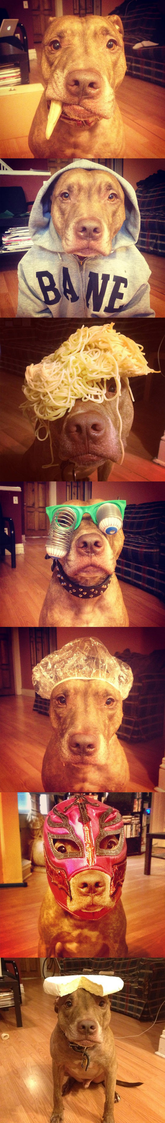 funny-dog-play-disguise-mask-hat