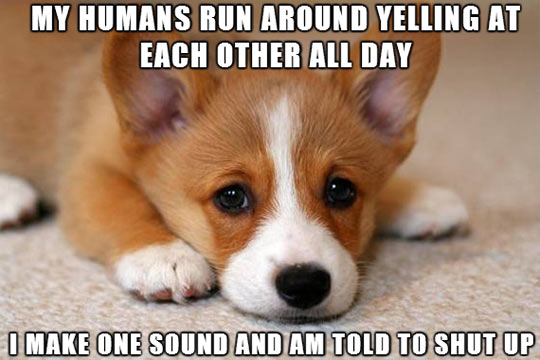 Dog speaks out…