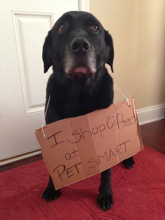 funny-dog-sing-cardboard-carpet
