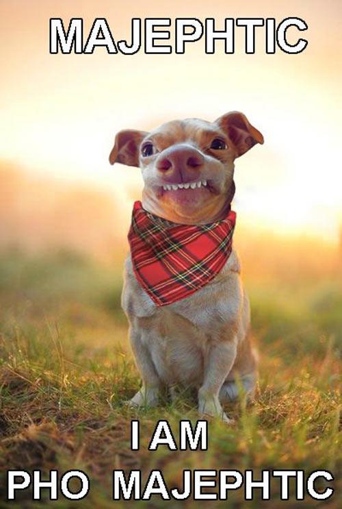 funny-dog-teeth-handkerchief-snout