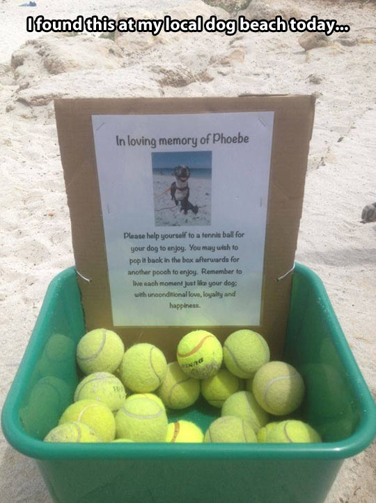 In the loving memory of a dog…