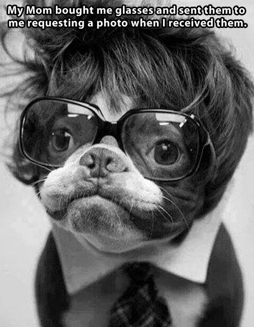 funny-dog-wig-glasses-suit