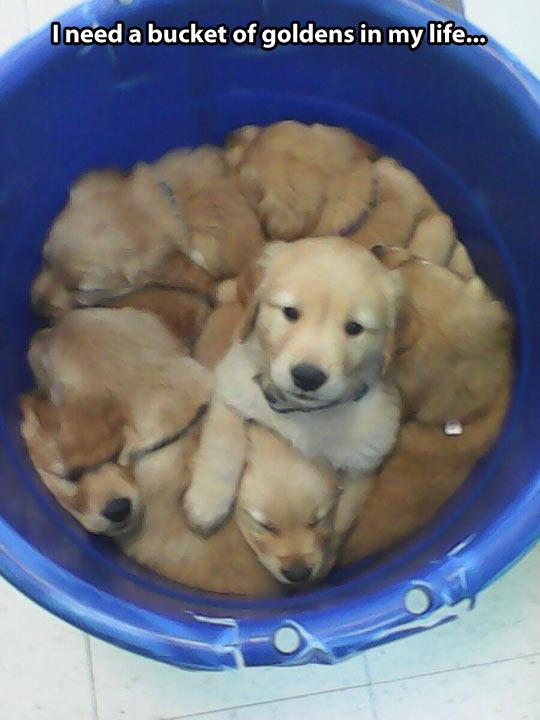 A Bucket of cuteness…
