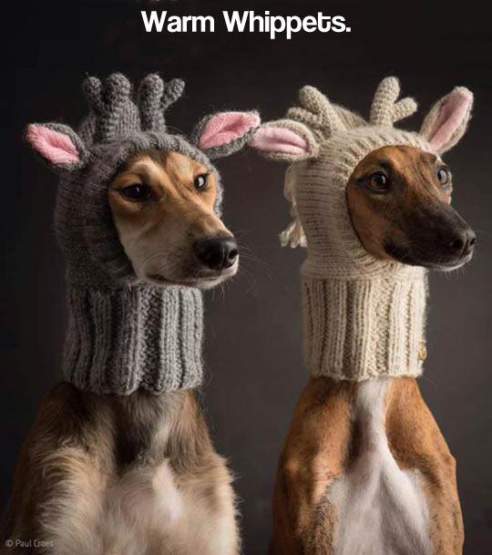 Such hat, much warm…