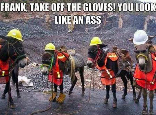 funny-donkey-workers-gloves-hat-equipment