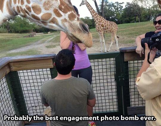 Giraffes, always ruining everything…