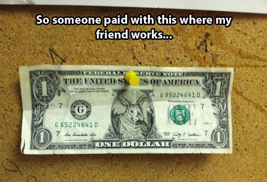 funny fake dollar bill bunny1 bunny money aol image search results