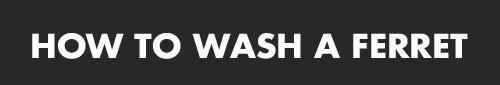 funny-ferret-washing-title