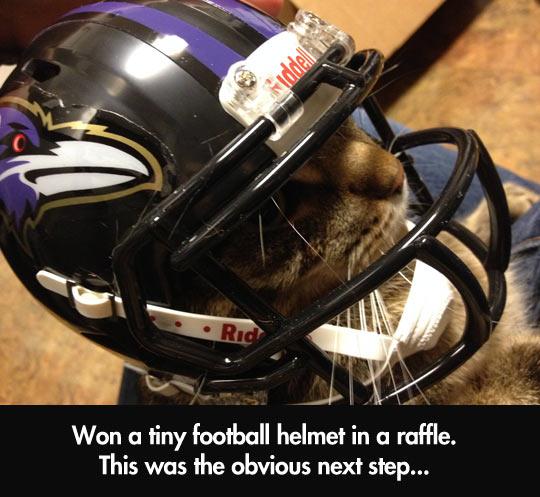 Tiny football helmet…