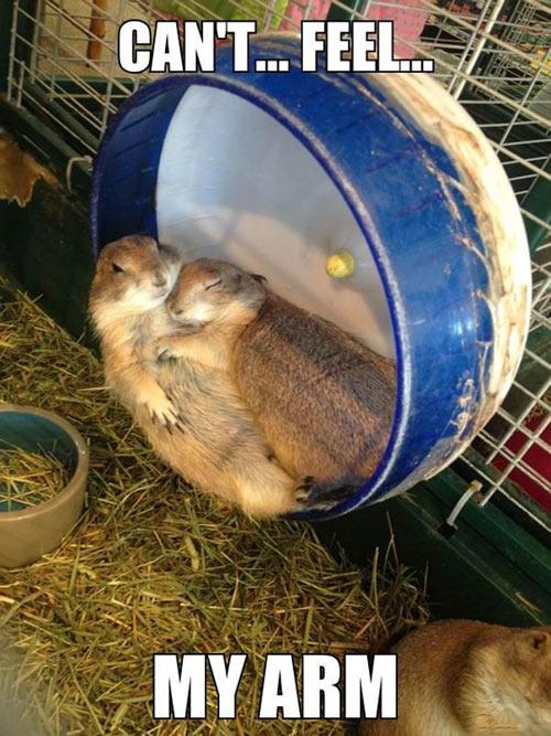 funny-hamster-hugging-sleeping-feel-arm