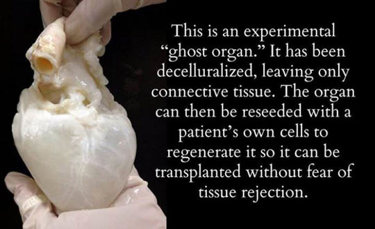 A ghost heart…