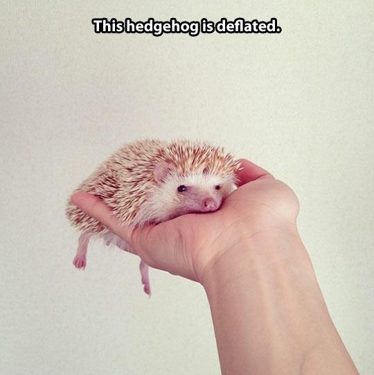 funny-hedgehog-hand-spike