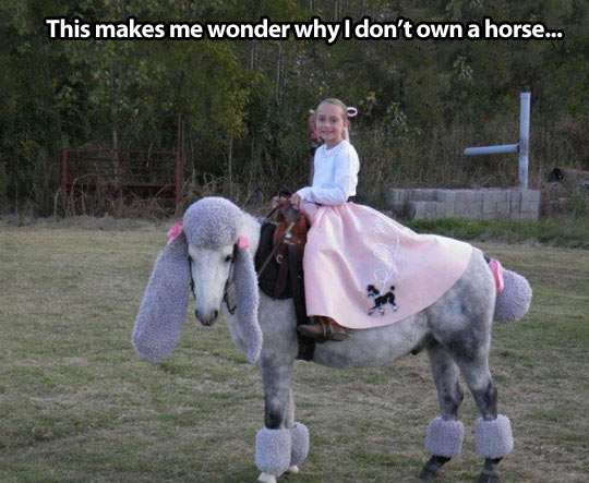 Why I need a horse…
