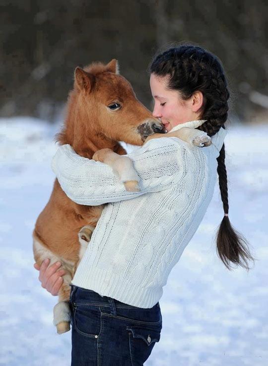 funny-horse-girl-hug-snow-winter