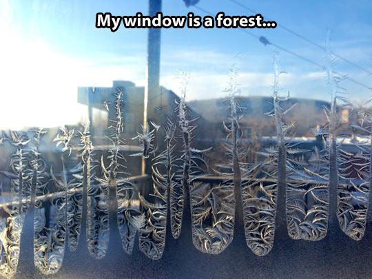 Ice fractals…