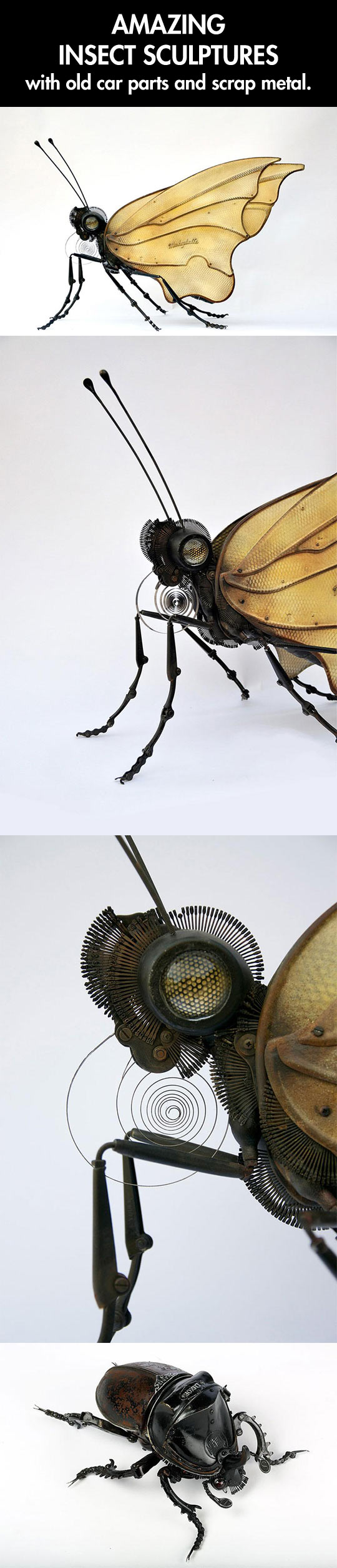Insect sculptures...