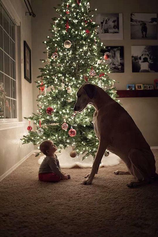 funny-kid-dog-Christmas-tree-stare