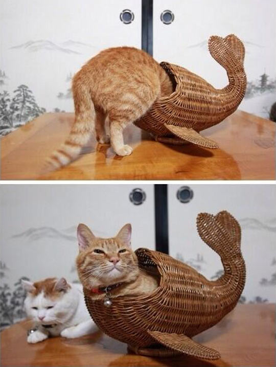 funny-kitty-cat-fish-whales