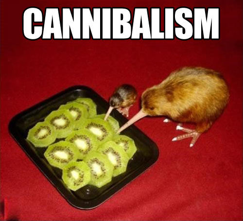Kiwi eating kiwi…
