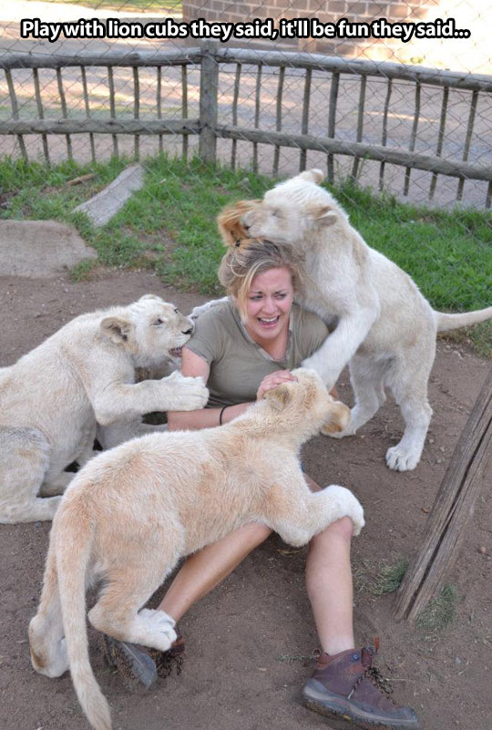 funny-lion-woman-zoo-attack-cage