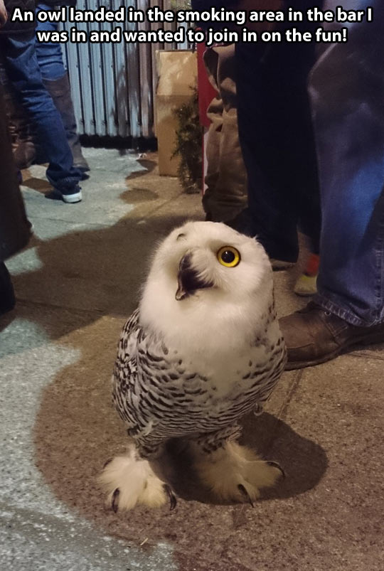 Disoriented owl…