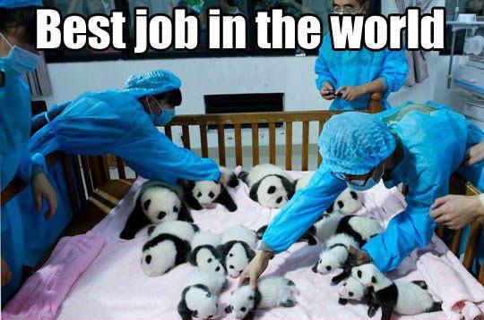 funny-panda-doctor-babies-job