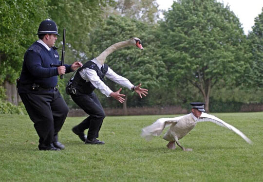 funny-police-swap-faces-switched-animals