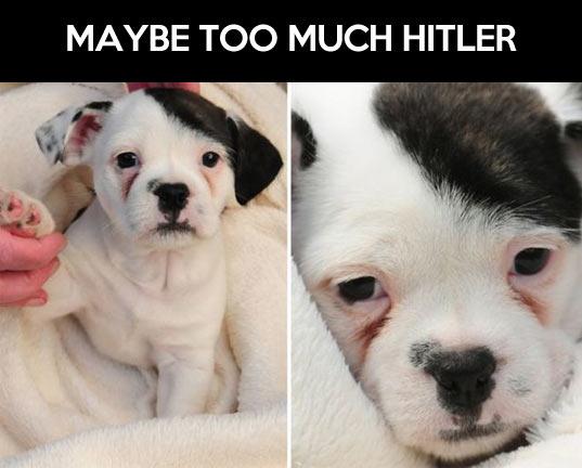 Dictator look alike…