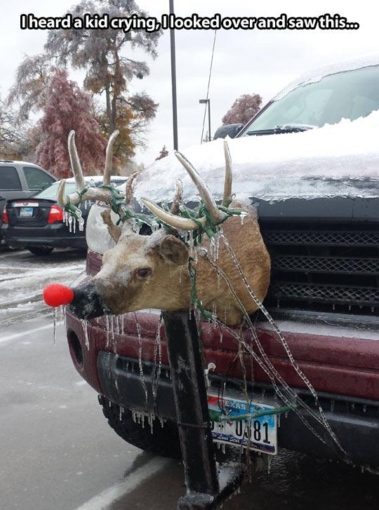 funny-reindeer-Rudolph-truck-head-frozen