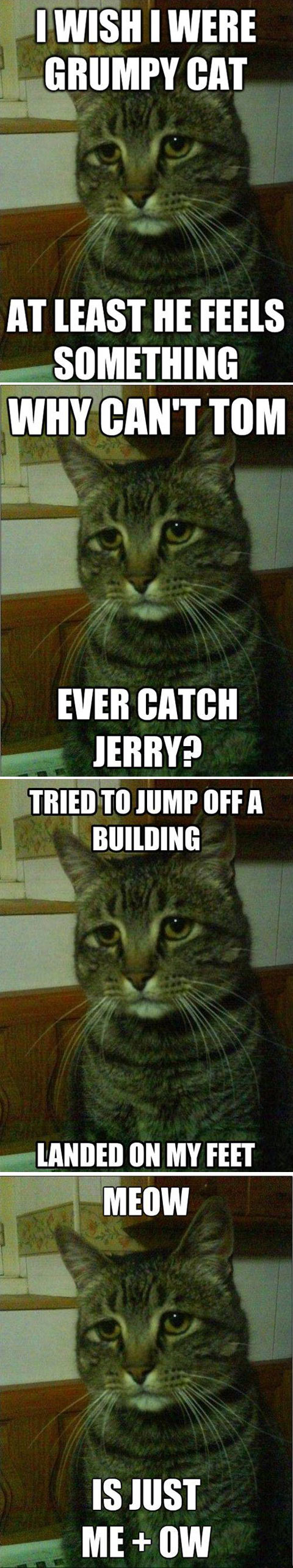 funny-sad-cat-wishes-Grumpy