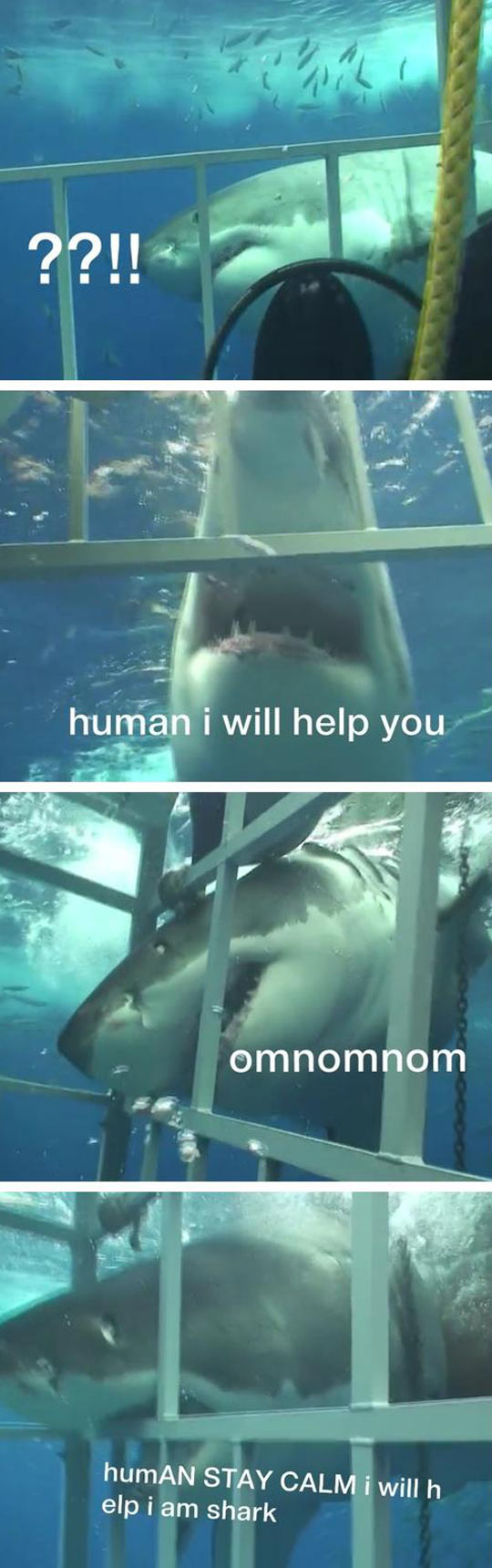 funny-shark-biting-water-cage-helping