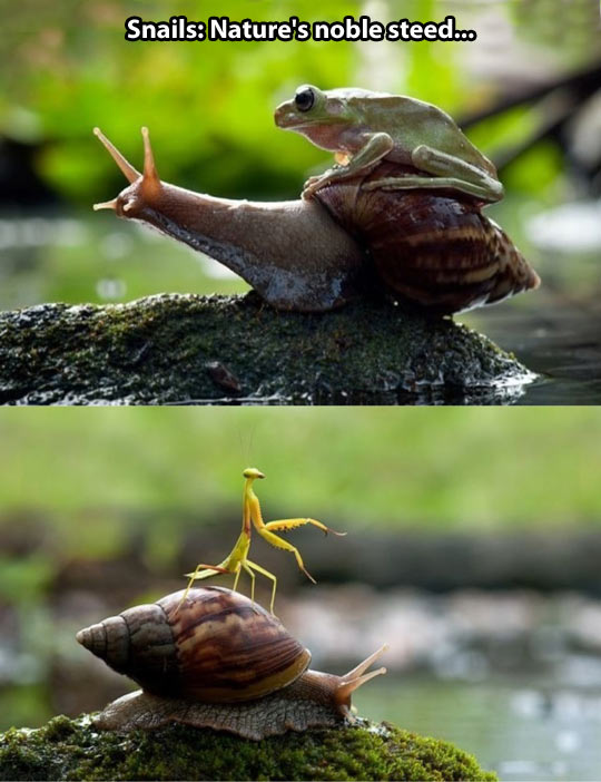 funny-snails-frog-nature-insects