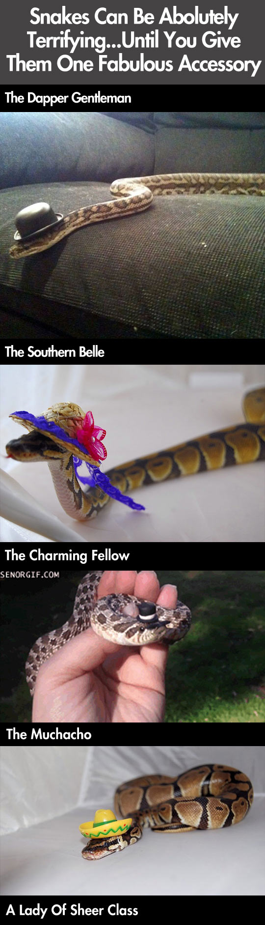 Snakes have never been more pretty...